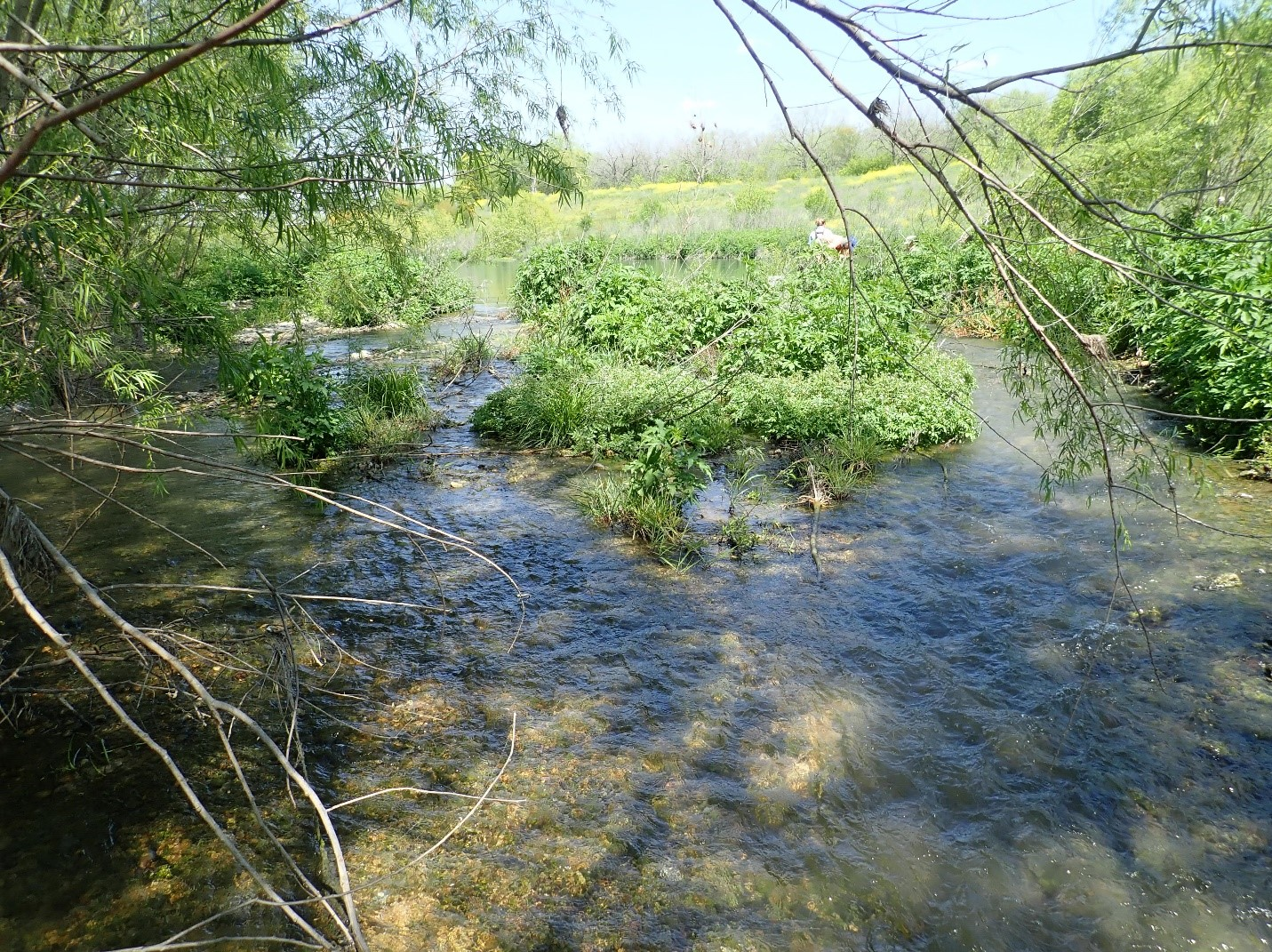 Biologists also measure things like available habitat for fish. Aquatic plants and naturally occurring riffles provide excellent habitat for all kinds of important aquatic organisms.