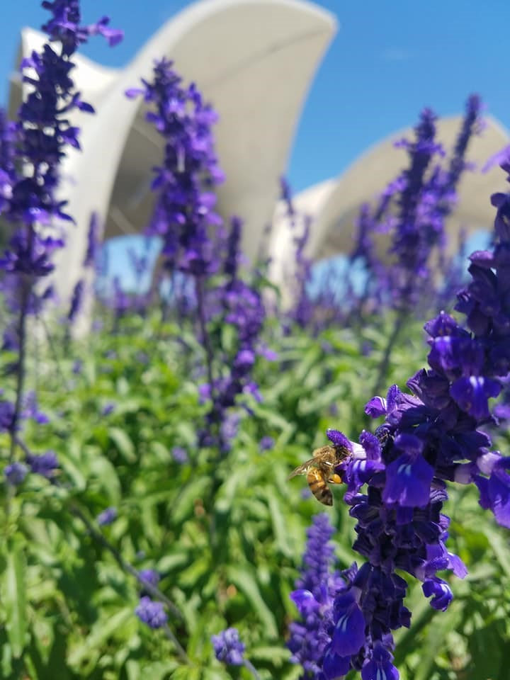 Bee resting on a bluebonnet at Confluence Park.