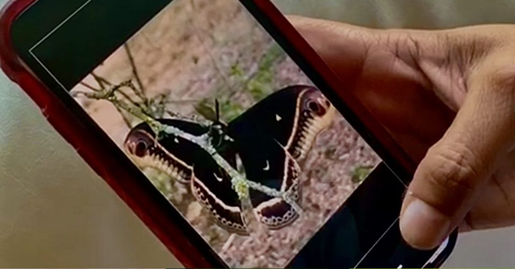 Students and adults are encouraged to use apps to record wildlife observations