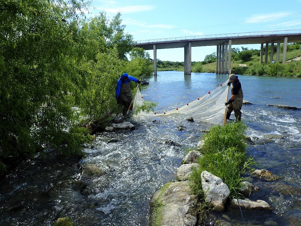 River Authority Environmental Sciences field staff conducting a fish survey.