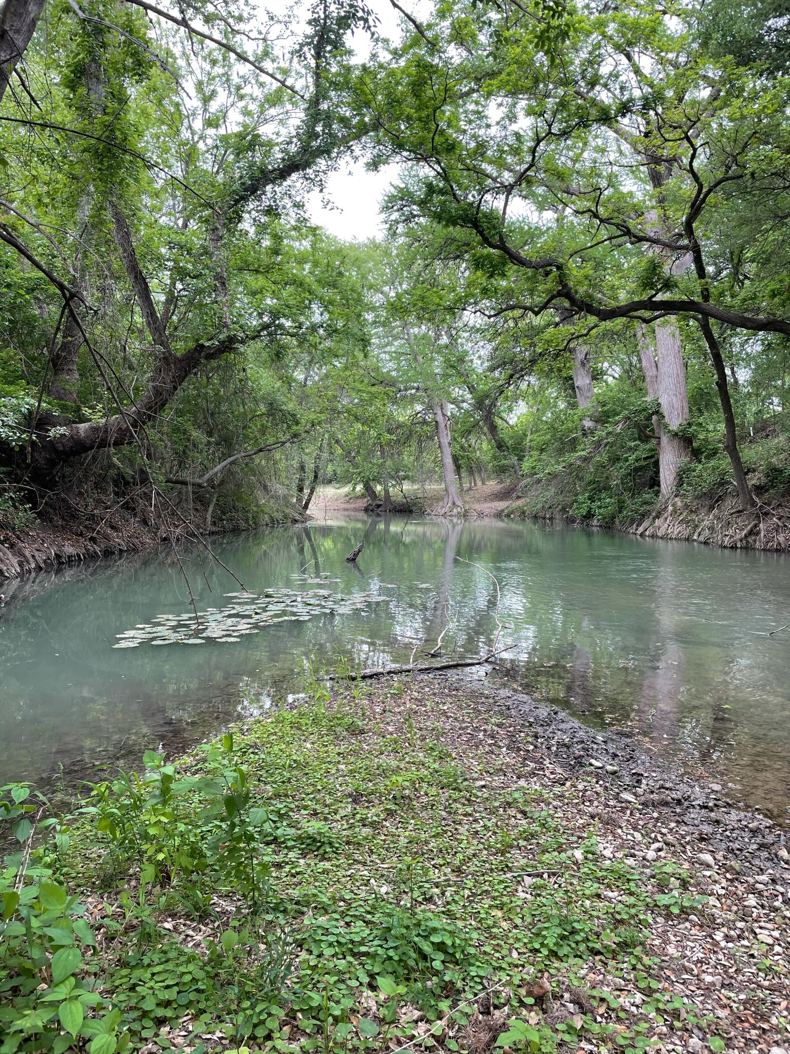 RE_Medina River 2021