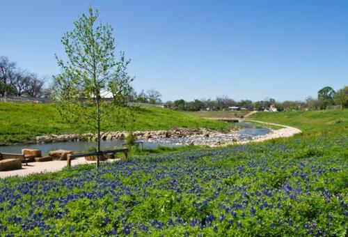 Bluebonnets are seen along the Mission Reach segment of the San Antonio River Walk