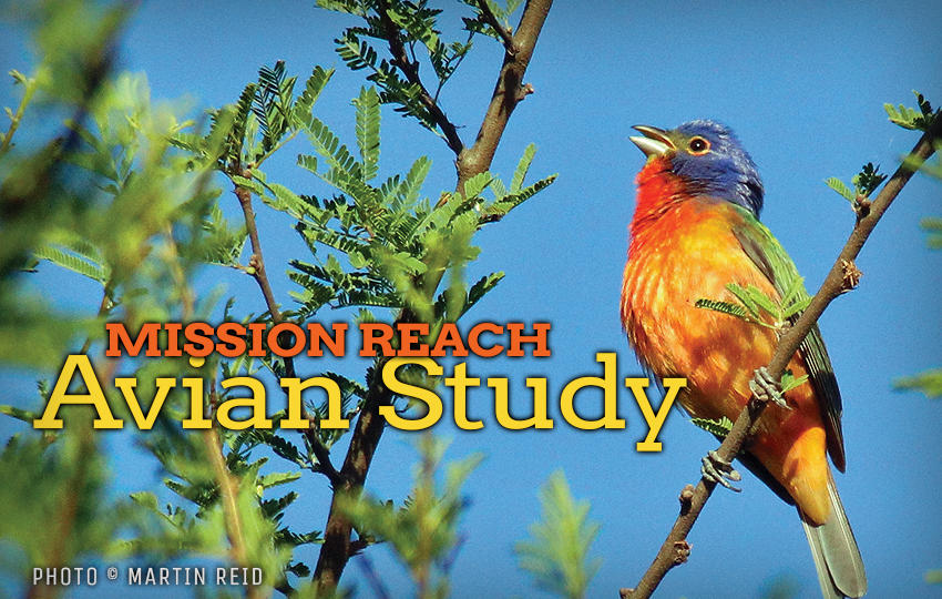 Mission Reach Avian Study