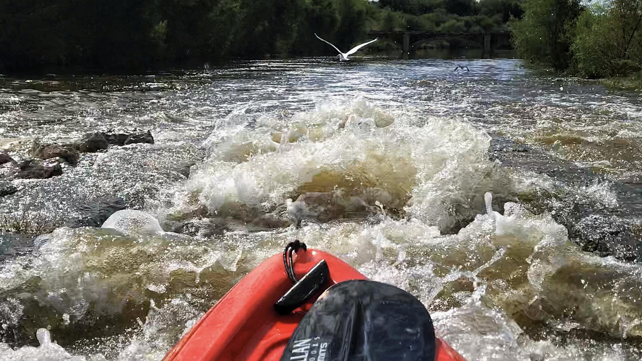 Kayaking and Great Egret bird
