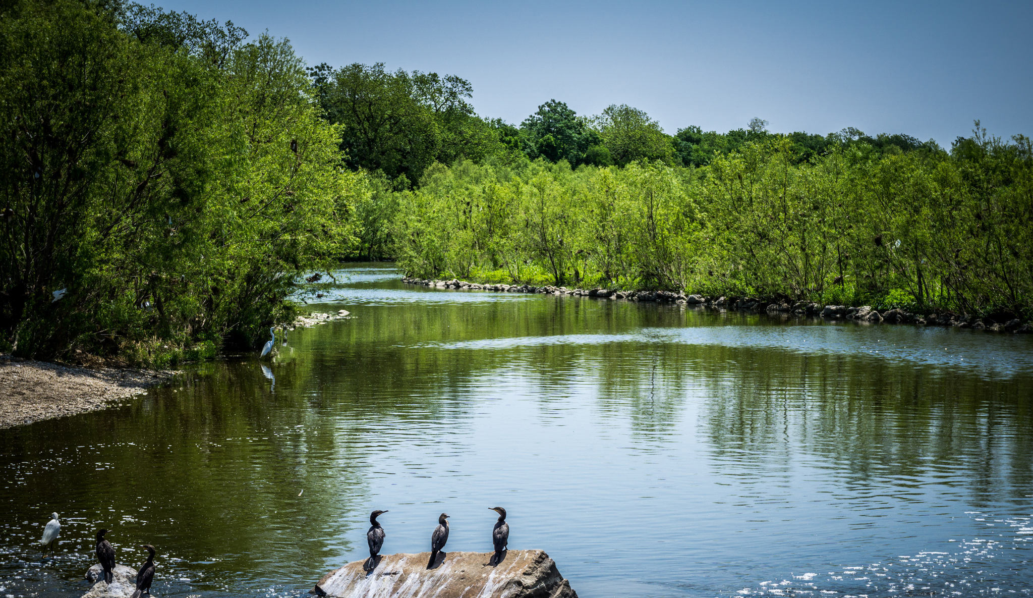 San Antonio River with birds on a rock outcropping