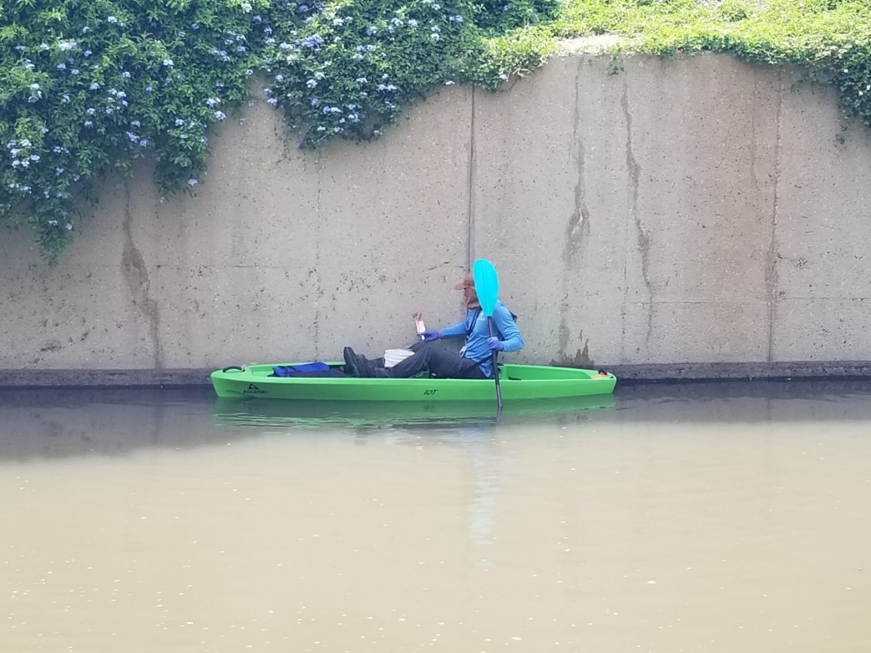 River Authority staff kayak the San Antonio River to find Apple Snail egg clusters.